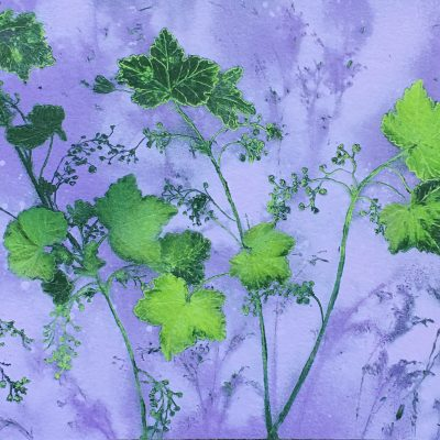 8-Wild-Currant-Liffey-Bank-Celbridge-22X26cm